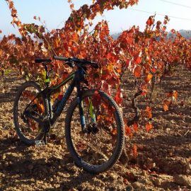 By bike through the vineyards