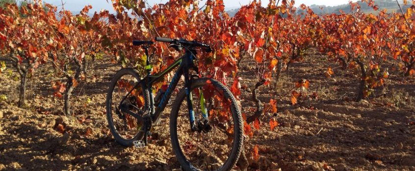 A bicycle tour through the vineyards of an iconic wine region